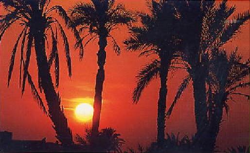 追憶のチュニジア (1)_c0011649_9145573.jpg