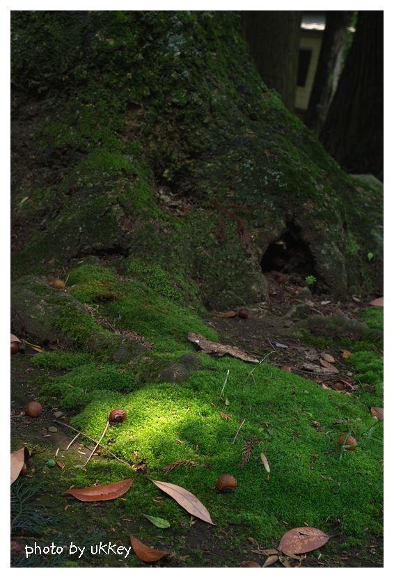 spotlight in green_e0063851_110751.jpg