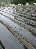 田植えは、雨天決行です_f0071456_23163072.jpg