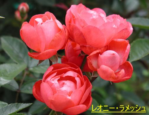 b0074359_2232467.jpg