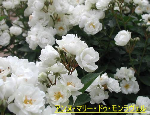 b0074359_22344169.jpg