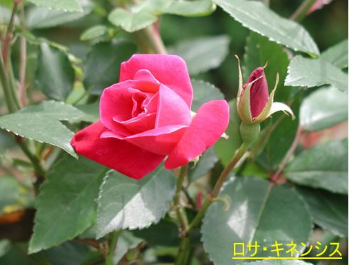 b0074359_22364371.jpg