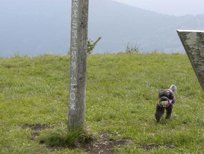 矢倉岳を登って来たよ_a0109467_1716529.jpg