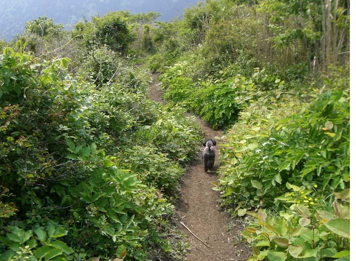 矢倉岳を登って来たよ_a0109467_17251137.jpg