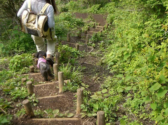 矢倉岳を登って来たよ_a0109467_17263934.jpg