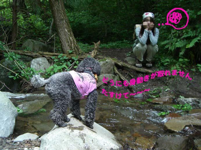 矢倉岳を登って来たよ_a0109467_17421893.jpg