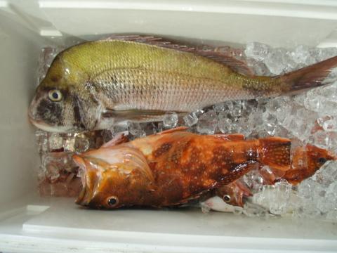 鯛釣り師達_a0077071_16513488.jpg