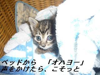b0112380_11254099.jpg