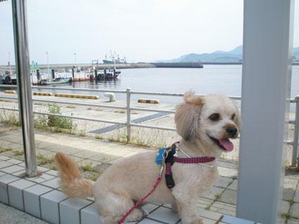 徳島ミニ旅行 1_e0127286_23545822.jpg
