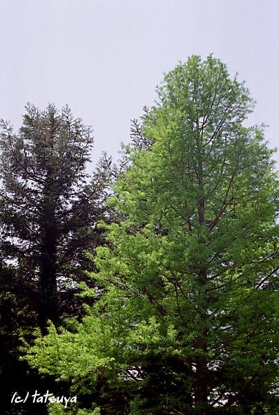 May.  24  (sat)   tree_f0139991_18314172.jpg