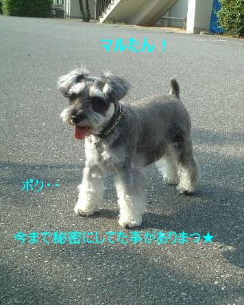 d0079701_203715.jpg