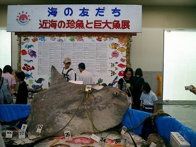 水産祭り_d0050503_1523253.jpg