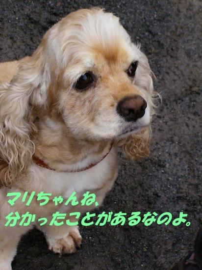 b0067012_21161679.jpg