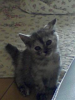 子猫_f0015517_1446442.jpg
