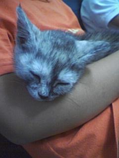 子猫_f0015517_14464497.jpg
