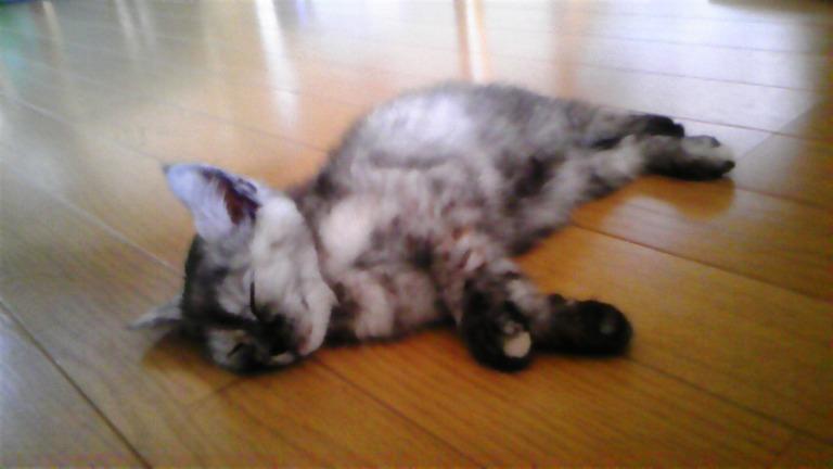 子猫_f0015517_14542348.jpg