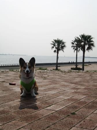 久しぶりの城南島海浜公園_f0155118_23163713.jpg