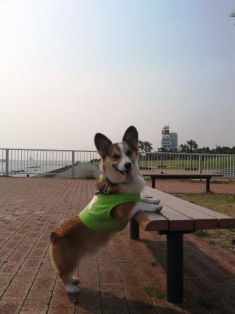 久しぶりの城南島海浜公園_f0155118_23182087.jpg