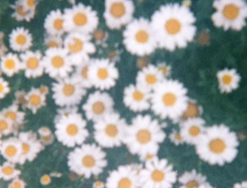 f0169361_116494.jpg