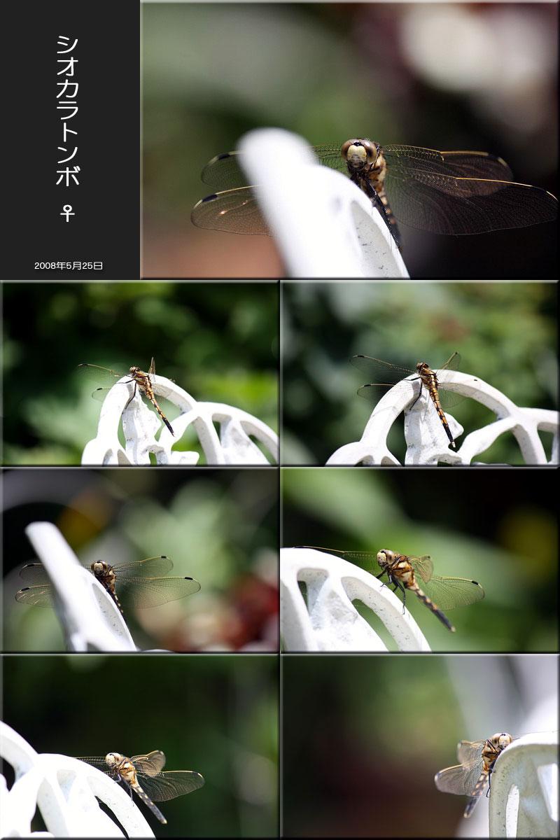 f0175869_2365272.jpg