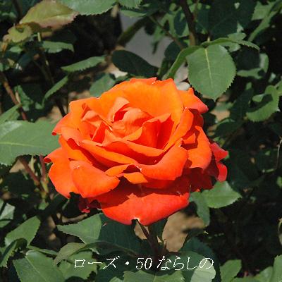 f0131070_20532193.jpg