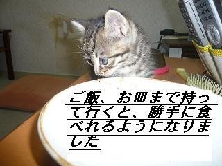 b0112380_1949389.jpg