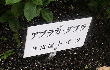 バラ園♪_d0078486_23121797.jpg