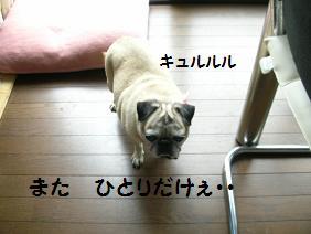 c0139488_150932.jpg