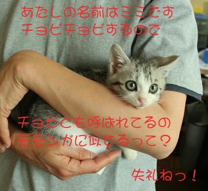 d0071596_20222432.jpg