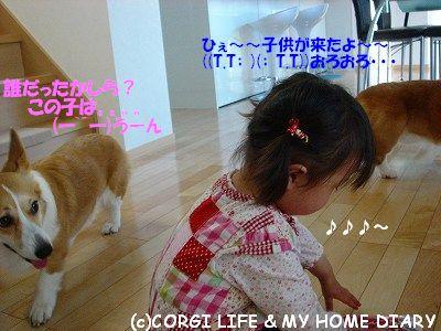 c0153410_2145026.jpg