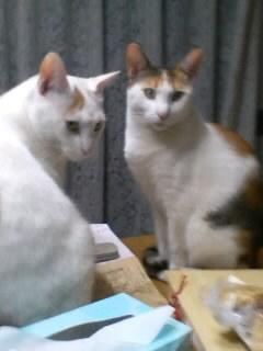 突然の電話は、猫ちゃんの里親捜しだった_f0148726_22144176.jpg
