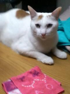 突然の電話は、猫ちゃんの里親捜しだった_f0148726_2215235.jpg