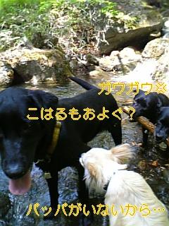 f0148927_1971370.jpg