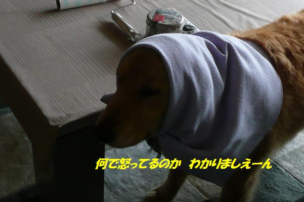 f0114128_1002232.jpg