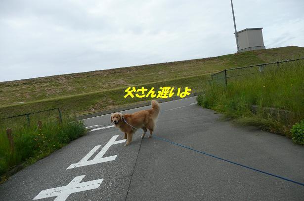 f0114128_105244.jpg