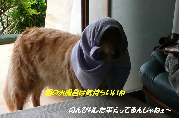 f0114128_959587.jpg