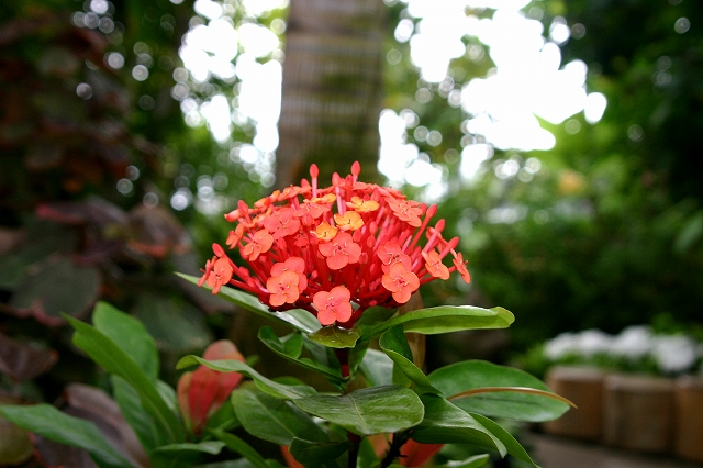 花の美術館へ~その4_d0152261_9494694.jpg