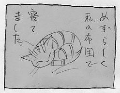 黒い大猫_a0064067_2152750.jpg