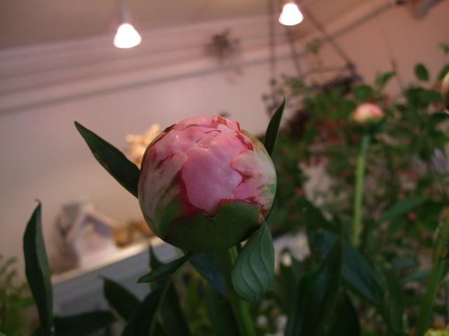 オークリーフ(蕾の花たち)_f0049672_17573730.jpg