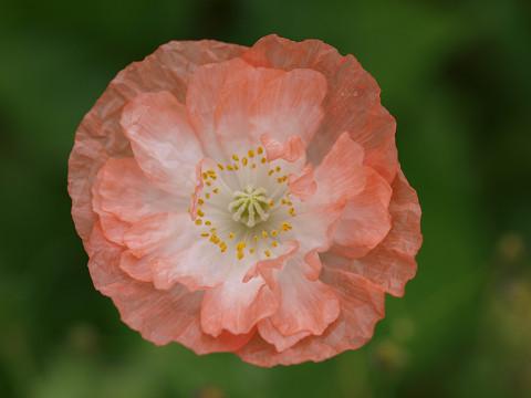 庭の花とむしたち_b0135573_7474769.jpg