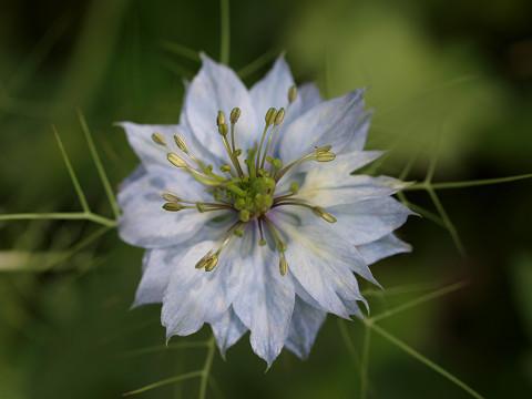 庭の花とむしたち_b0135573_748219.jpg