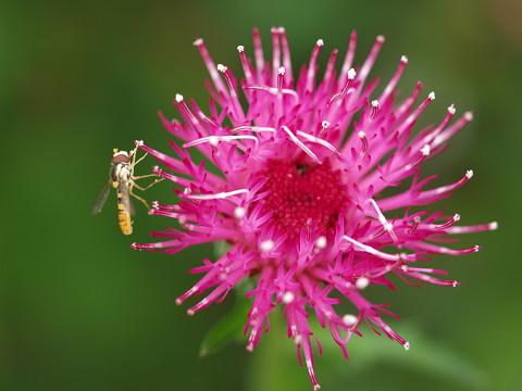 庭の花とむしたち_b0135573_7483117.jpg