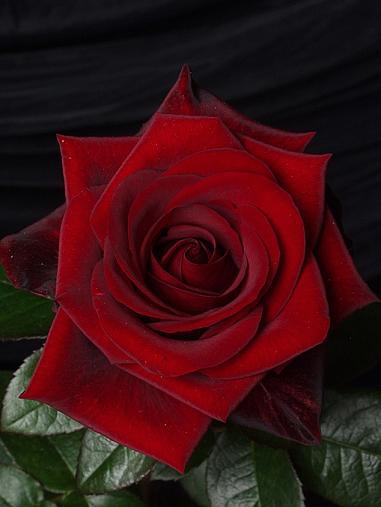 酒鬼薔薇、日本で表舞台に「デビュー」から11年_c0139575_2321886.jpg