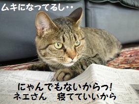 c0139488_1775183.jpg