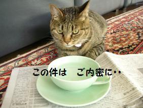 c0139488_178257.jpg