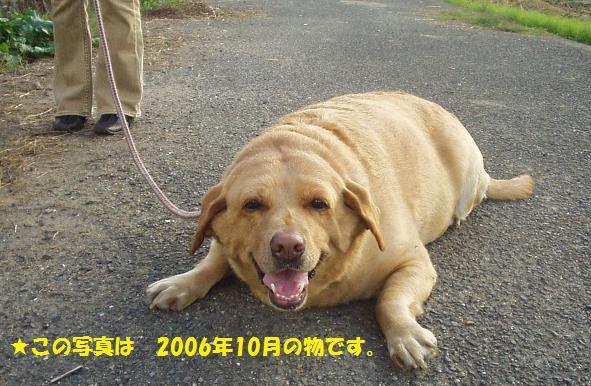 c0098501_1711241.jpg