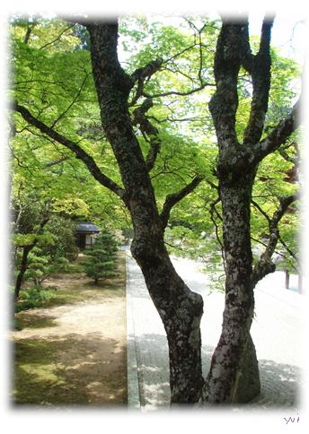 高野山旅行記 Part3_d0075206_14541333.jpg
