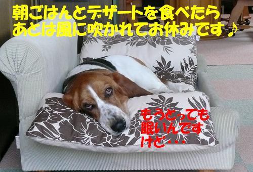 f0121712_13504182.jpg