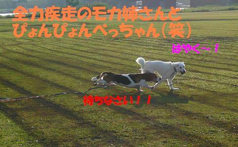 f0121712_13551352.jpg