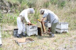 蜂蜜とれました_c0123523_1852165.jpg